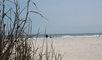 View of Pawleys Island Beach through sea oats on the dunes